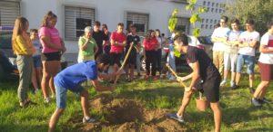 Día del árbol 2