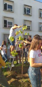 Día del árbol 3